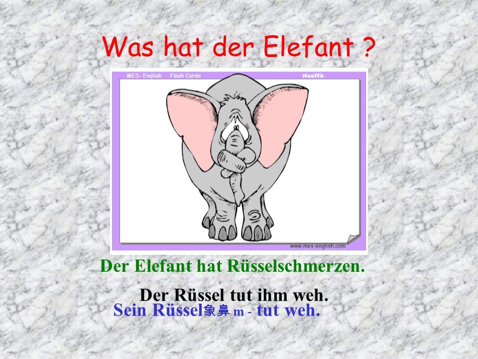 Was hat der Elefant ? Der Elefant hat Rüsselschmerzen. Sein Rüssel m - tut weh. Der Rüssel tut ihm weh.