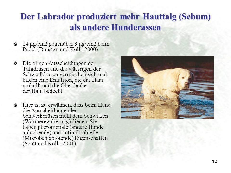 13 Der Labrador produziert mehr Hauttalg (Sebum) als andere Hunderassen 14 μg/cm2 gegenüber 3 μg/cm2 beim Pudel (Dunstan und Koll., 2000).