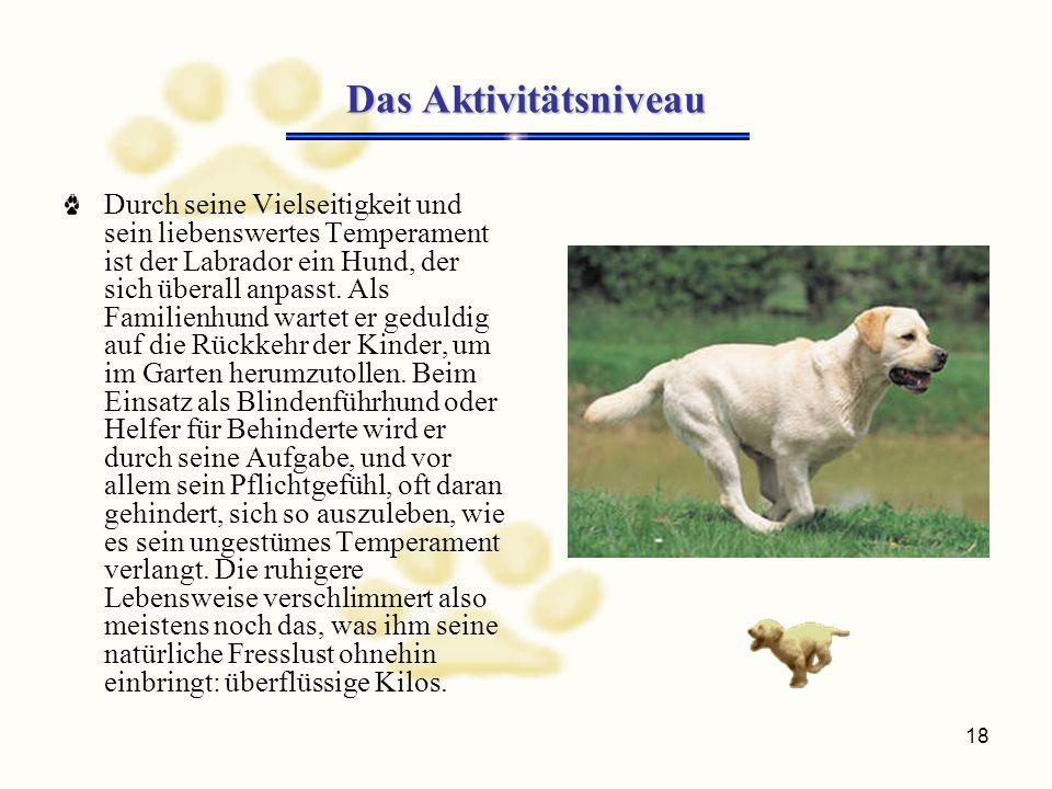 18 Das Aktivitätsniveau Durch seine Vielseitigkeit und sein liebenswertes Temperament ist der Labrador ein Hund, der sich überall anpasst.