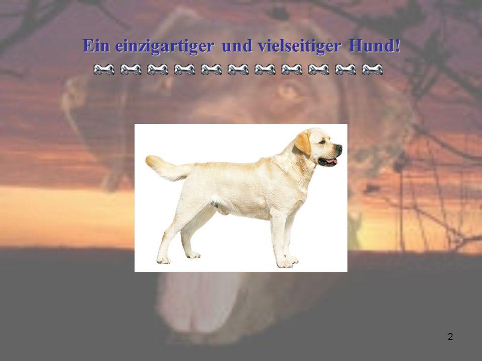 2 Ein einzigartiger und vielseitiger Hund!