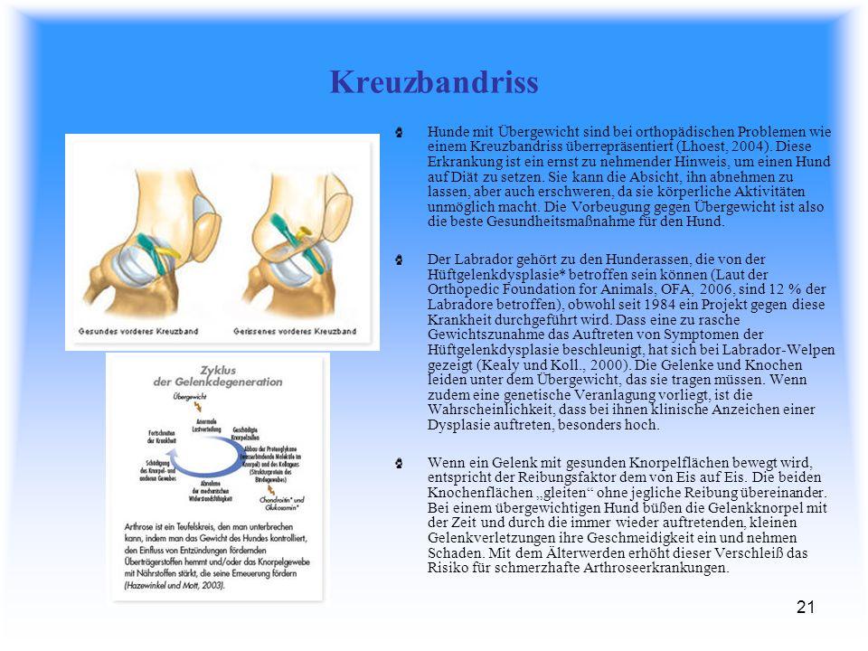 21 Kreuzbandriss Hunde mit Übergewicht sind bei orthopädischen Problemen wie einem Kreuzbandriss überrepräsentiert (Lhoest, 2004).