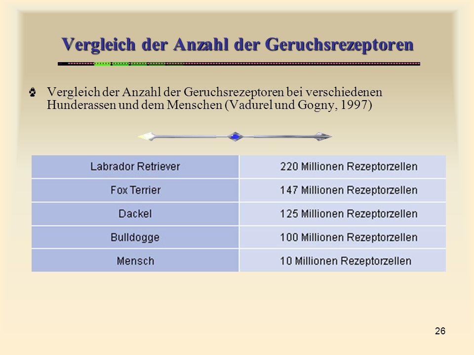 26 Vergleich der Anzahl der Geruchsrezeptoren Vergleich der Anzahl der Geruchsrezeptoren bei verschiedenen Hunderassen und dem Menschen (Vadurel und Gogny, 1997)