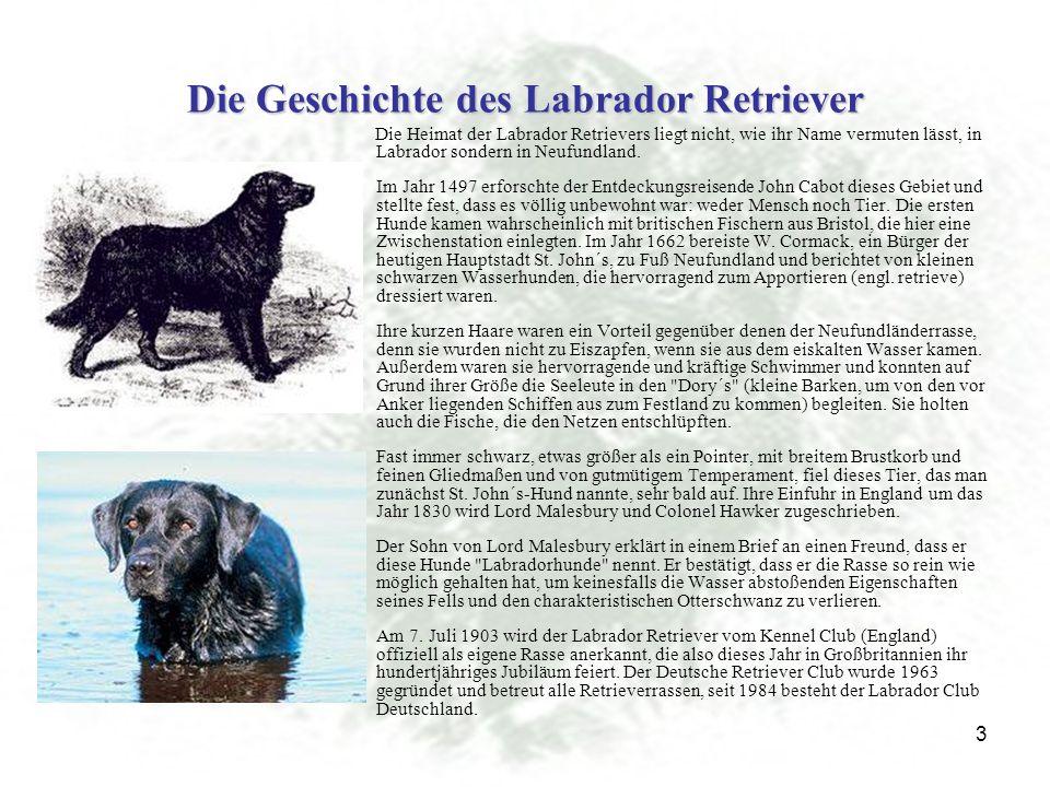 3 Die Geschichte des Labrador Retriever Die Heimat der Labrador Retrievers liegt nicht, wie ihr Name vermuten lässt, in Labrador sondern in Neufundland.