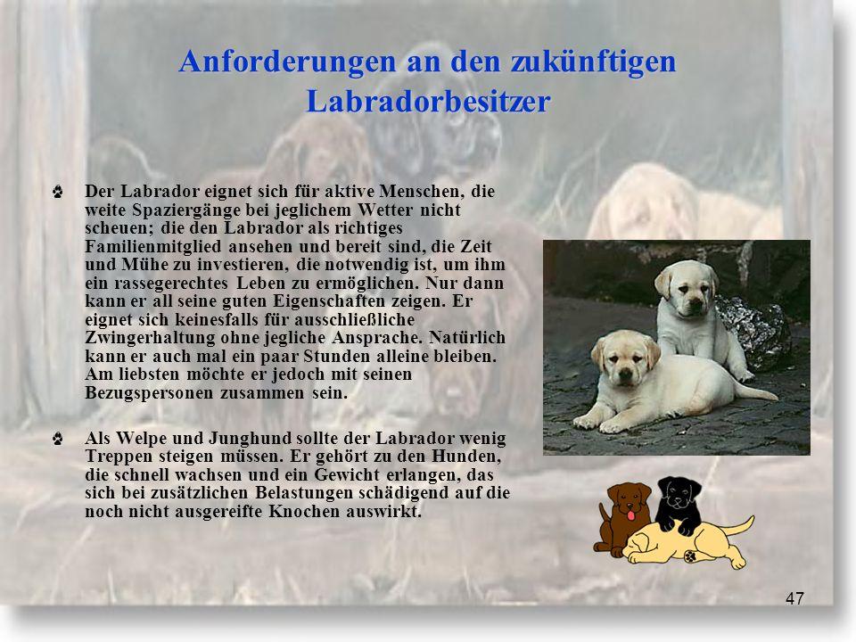 47 Anforderungen an den zukünftigen Labradorbesitzer Der Labrador eignet sich für aktive Menschen, die weite Spaziergänge bei jeglichem Wetter nicht scheuen; die den Labrador als richtiges Familienmitglied ansehen und bereit sind, die Zeit und Mühe zu investieren, die notwendig ist, um ihm ein rassegerechtes Leben zu ermöglichen.