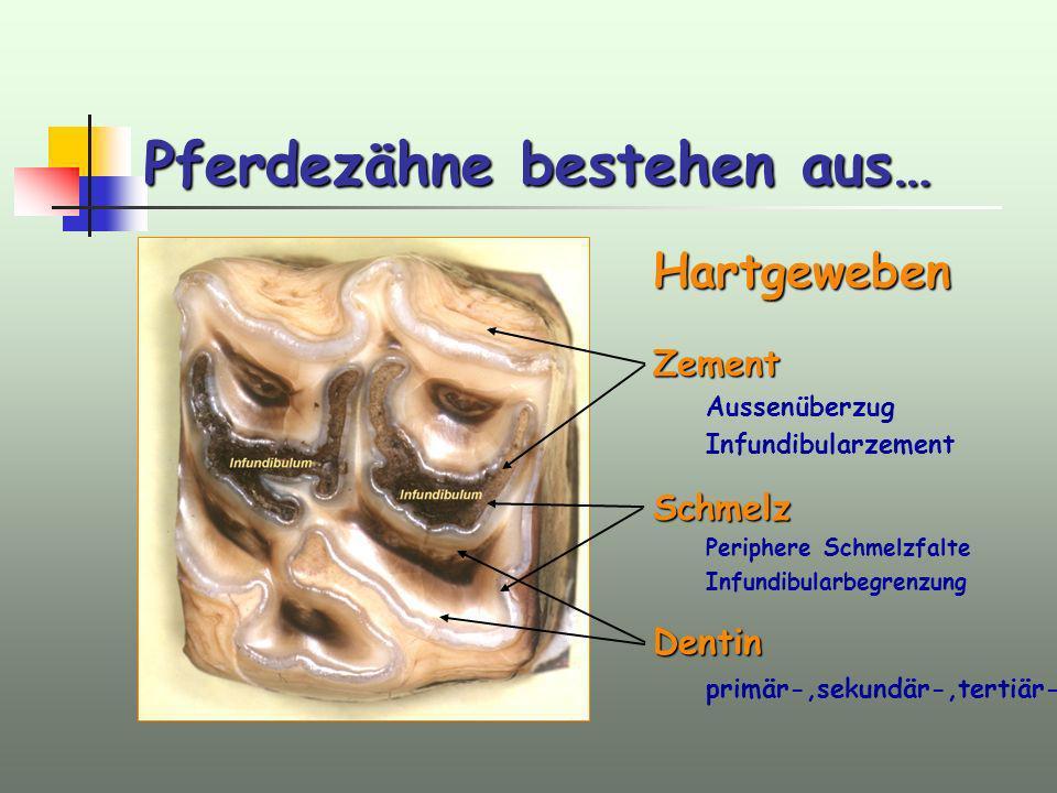 Pferdezähne bestehen aus… HartgewebenZement Aussenüberzug InfundibularzementSchmelz Periphere Schmelzfalte InfundibularbegrenzungDentin primär-,sekund