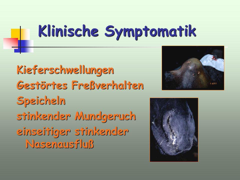 Klinische Symptomatik Kieferschwellungen Gestörtes Freßverhalten Speicheln stinkender Mundgeruch einseitiger stinkender Nasenausfluß