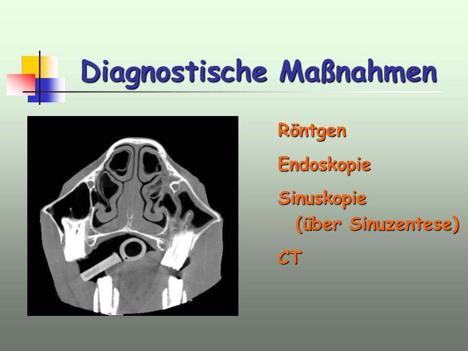 Diagnostische Maßnahmen AnamneseAllgemeinzustandAdspektionPalpationPerkussionBlutbild RöntgenEndoskopieSinuskopie (über Sinuzentese) CT
