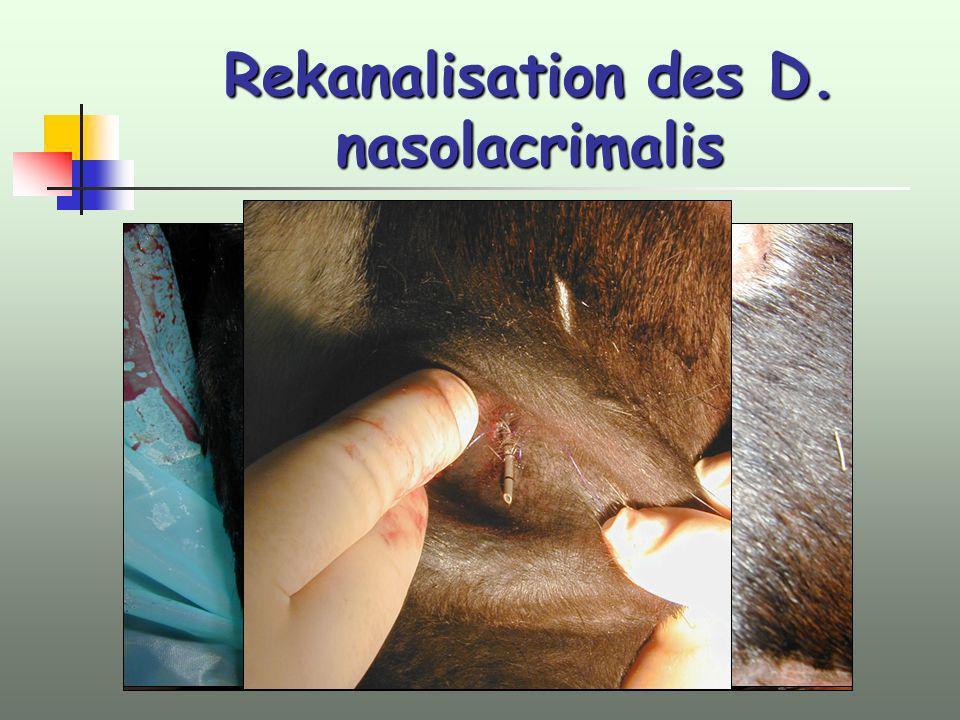 Rekanalisation des D. nasolacrimalis Freispülen mit Borwasser Einbringen eins dünnlumigen Rüden-Harnkatheters über unteres Punctum lacrimale Fixation