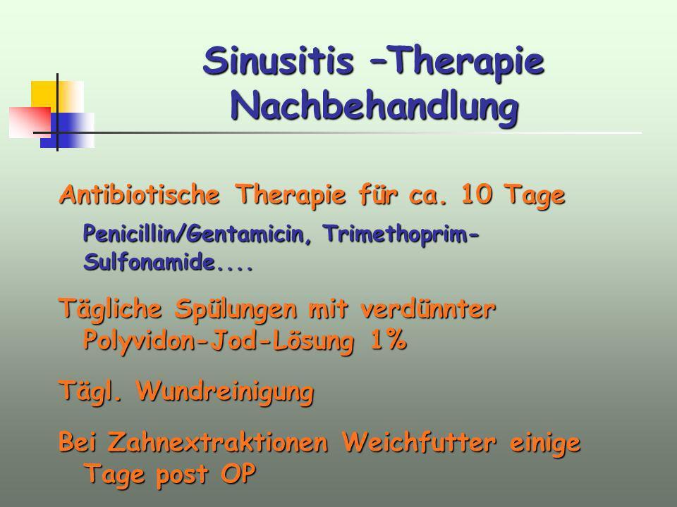Sinusitis –Therapie Nachbehandlung Antibiotische Therapie für ca. 10 Tage Penicillin/Gentamicin, Trimethoprim- Sulfonamide.... Tägliche Spülungen mit