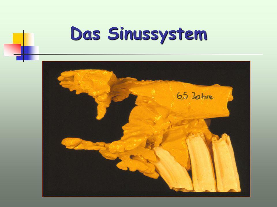 Das Sinussystem