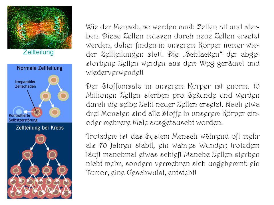 Wie der Mensch, so werden auch Zellen alt und ster- ben. Diese Zellen müssen durch neue Zellen ersetzt werden, daher finden in unserem Körper immer wi