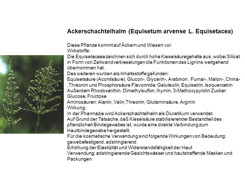 Ackerschachtelhalm (Equisetum arvense L.