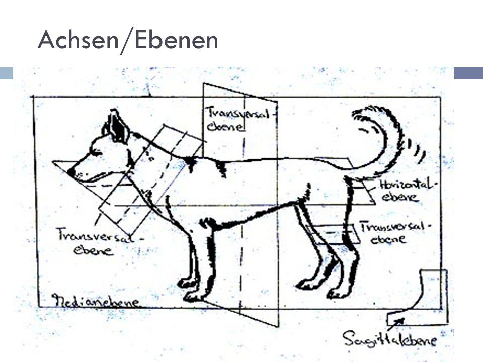 Achsen/Ebenen