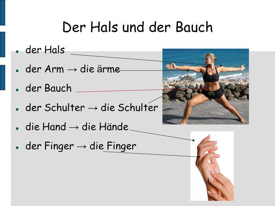 Der Hals und der Bauch der Hals der Arm die ä rme der Bauch der Schulter die Schulter die Hand die Hände der Finger die Finger