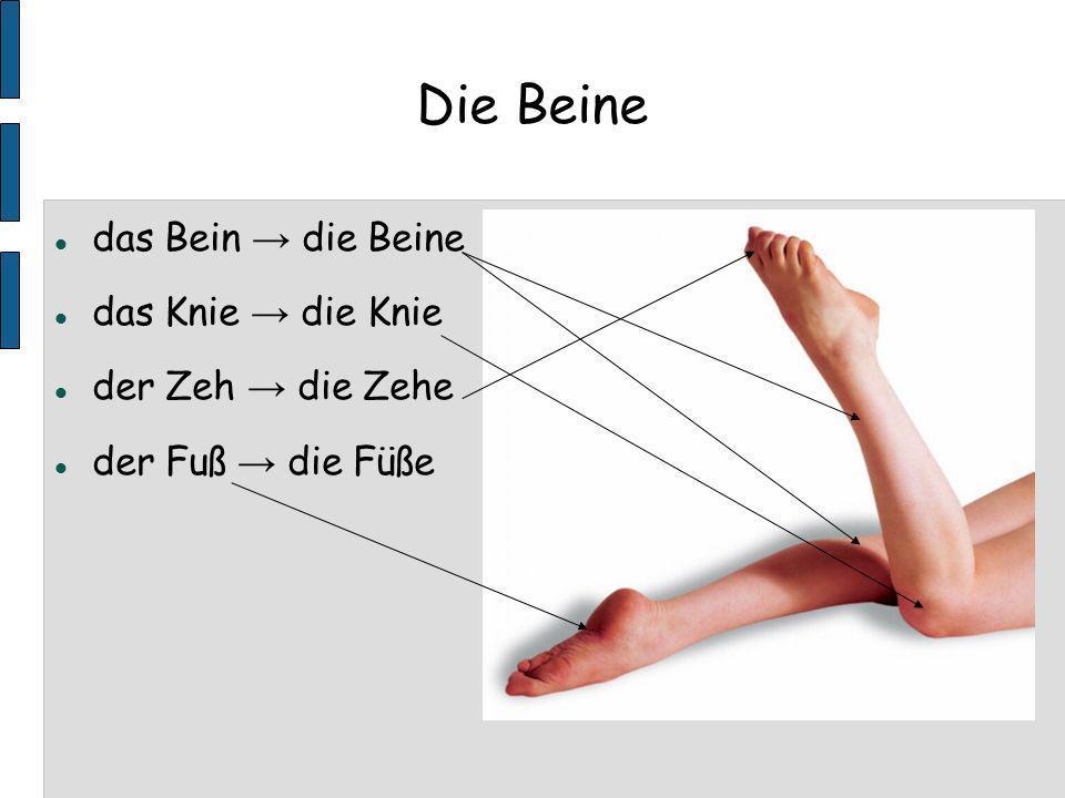 Die Beine das Bein die Beine das Knie die Knie der Zeh die Zehe der Fuß die Füße