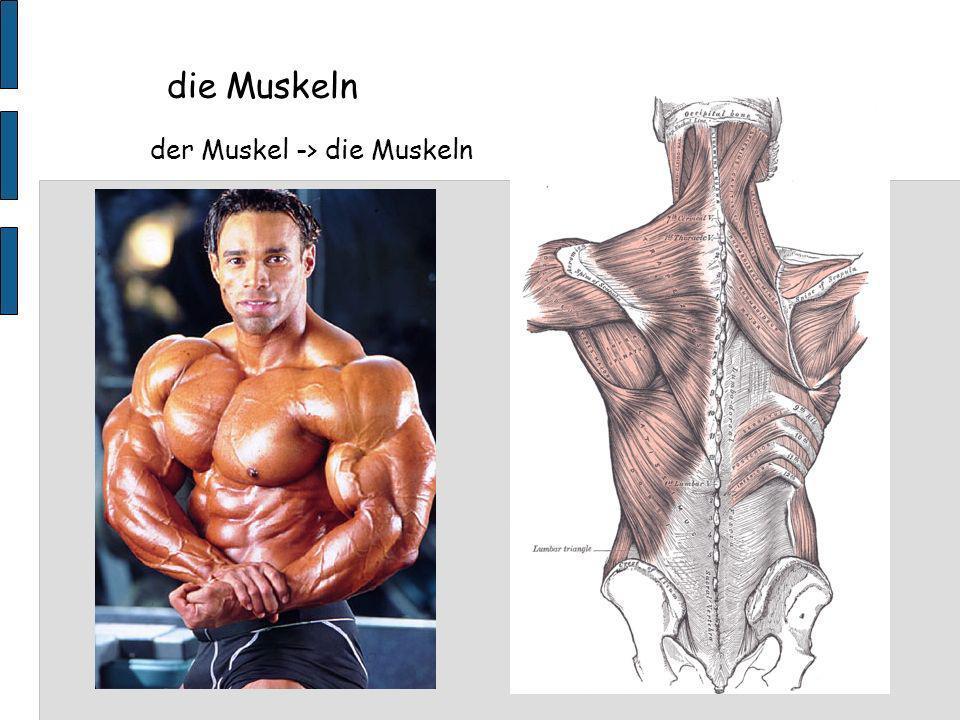 die Muskeln der Muskel -> die Muskeln