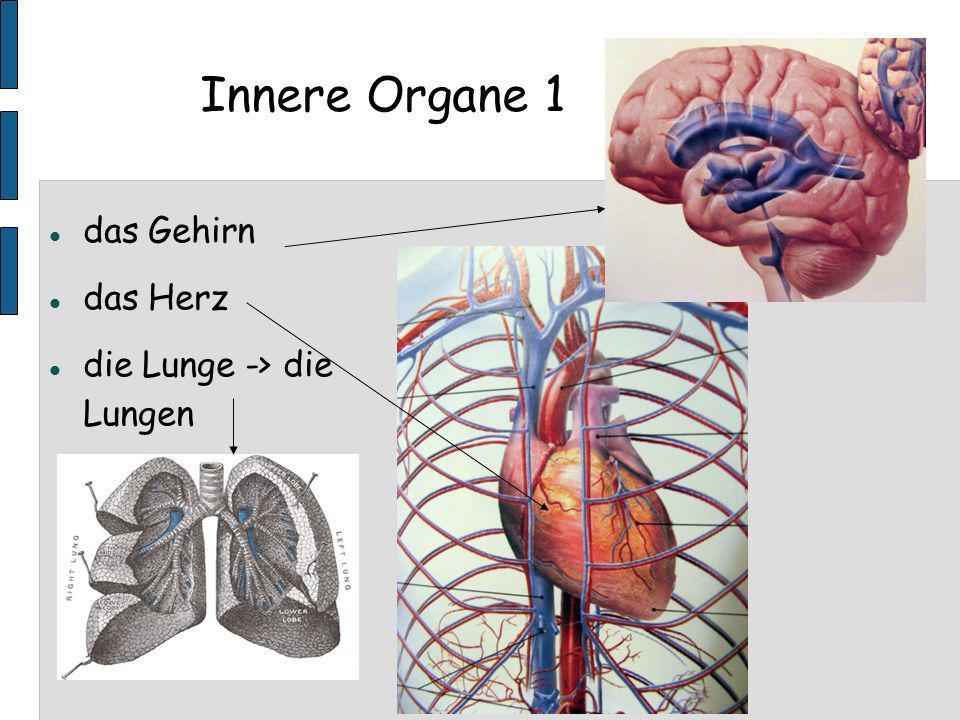 Innere Organe 1 das Gehirn das Herz die Lunge -> die Lungen