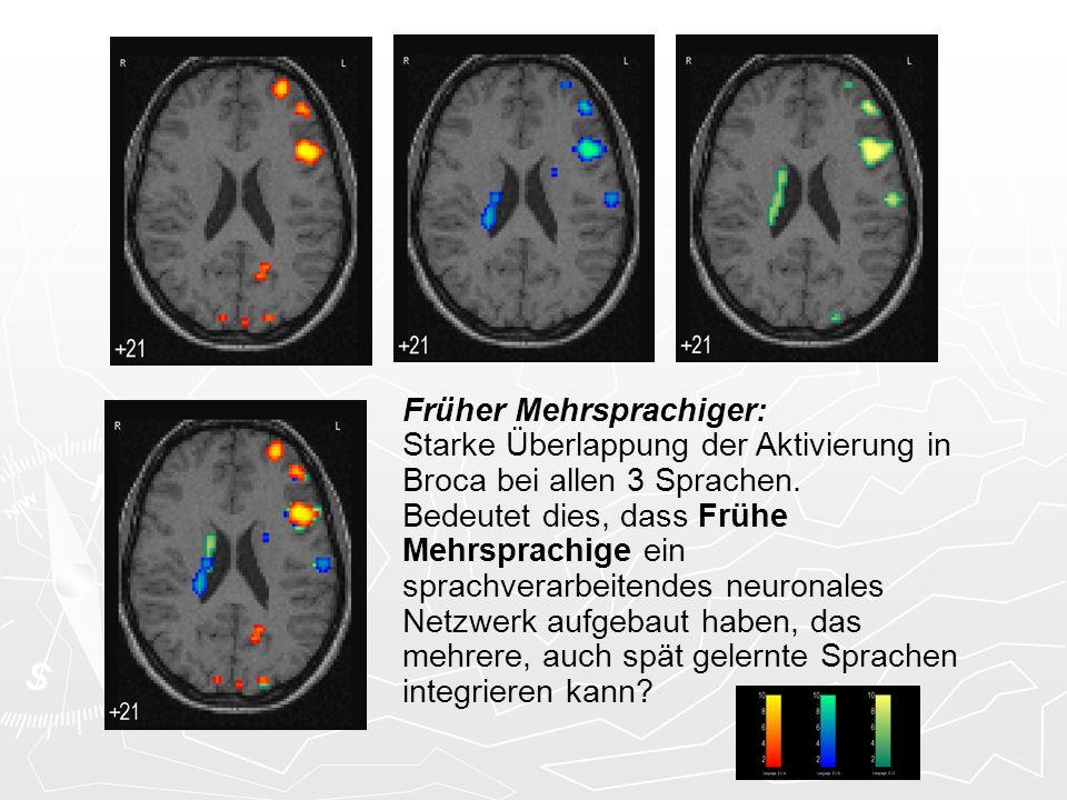 Früher Mehrsprachiger: Starke Überlappung der Aktivierung in Broca bei allen 3 Sprachen. Bedeutet dies, dass Frühe Mehrsprachige ein sprachverarbeiten