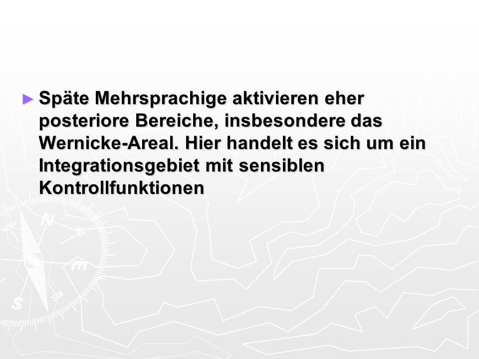 Späte Mehrsprachige aktivieren eher posteriore Bereiche, insbesondere das Wernicke-Areal. Hier handelt es sich um ein Integrationsgebiet mit sensiblen