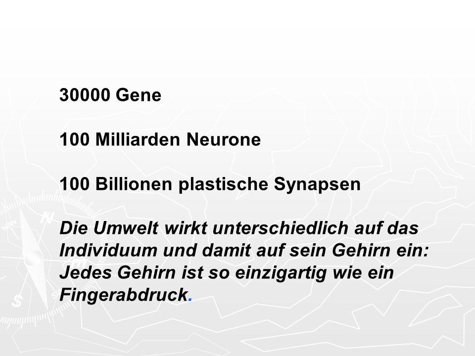 30000 Gene 100 Milliarden Neurone 100 Billionen plastische Synapsen Die Umwelt wirkt unterschiedlich auf das Individuum und damit auf sein Gehirn ein: