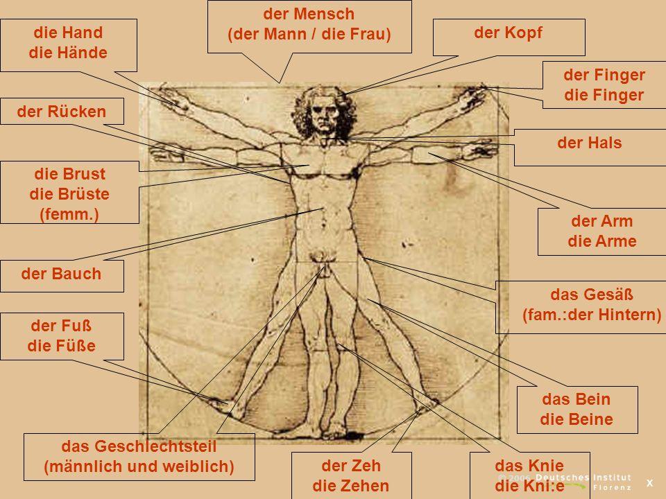 x © 2006 der Kopf der Arm die Arme das Bein die Beine der Fuß die Füße der Bauch die Brust die Brüste (femm.) die Hand die Hände der Finger die Finger