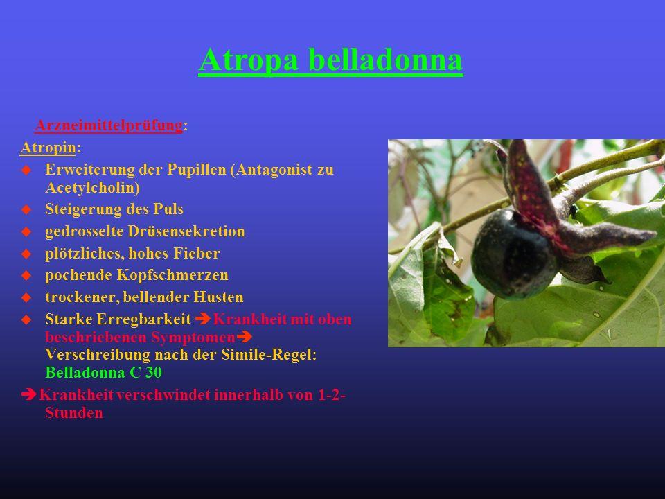 Arzneimittelprüfung: Atropin: u Erweiterung der Pupillen (Antagonist zu Acetylcholin) u Steigerung des Puls u gedrosselte Drüsensekretion u plötzliche
