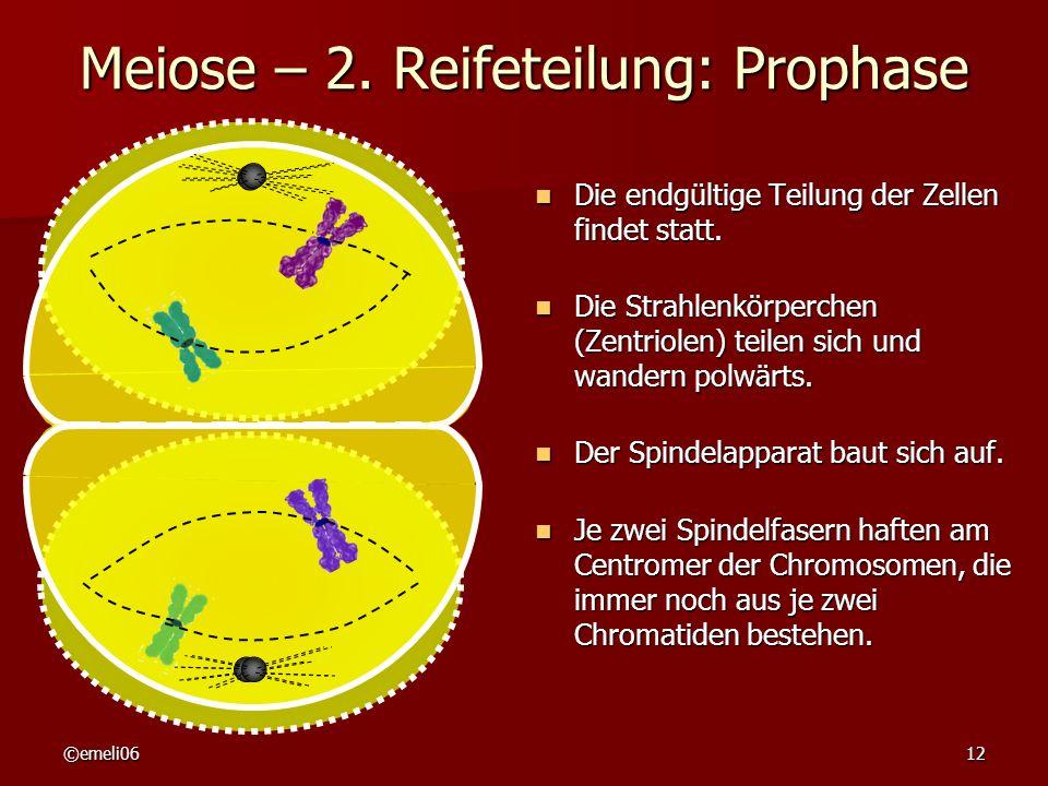 ©emeli0612 Meiose – 2. Reifeteilung: Prophase Die endgültige Teilung der Zellen findet statt. Die endgültige Teilung der Zellen findet statt. Die Stra