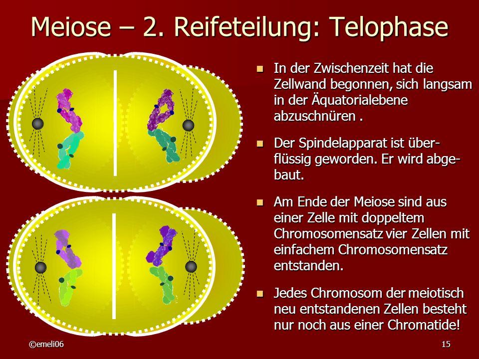 ©emeli0615 Meiose – 2. Reifeteilung: Telophase In der Zwischenzeit hat die Zellwand begonnen, sich langsam in der Äquatorialebene abzuschnüren. In der