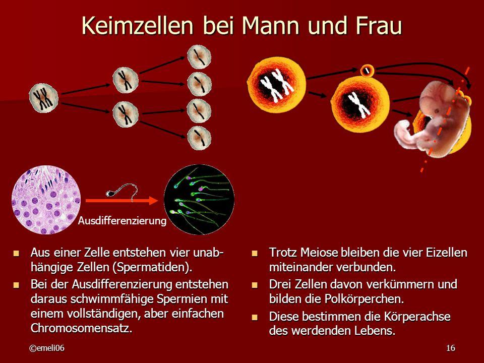 ©emeli0616 Keimzellen bei Mann und Frau Aus einer Zelle entstehen vier unab- hängige Zellen (Spermatiden).