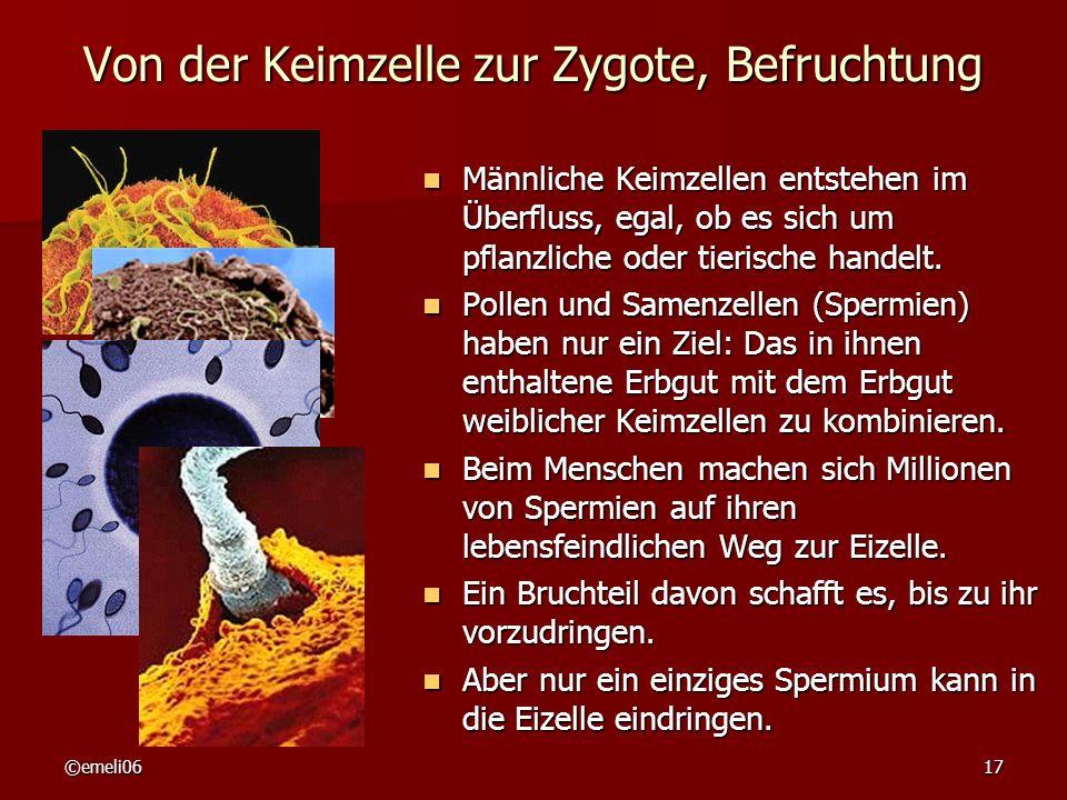 ©emeli0617 Von der Keimzelle zur Zygote, Befruchtung Männliche Keimzellen entstehen im Überfluss, egal, ob es sich um pflanzliche oder tierische handelt.