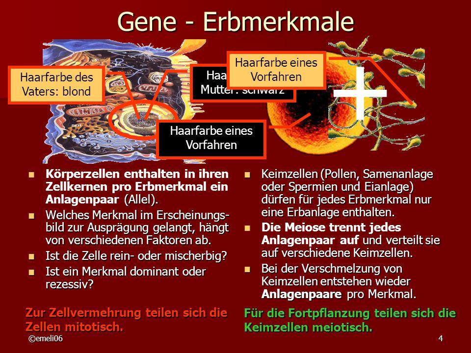 ©emeli064 Gene - Erbmerkmale (Allel). Körperzellen enthalten in ihren Zellkernen pro Erbmerkmal ein Anlagenpaar (Allel). Welches Merkmal im Erscheinun