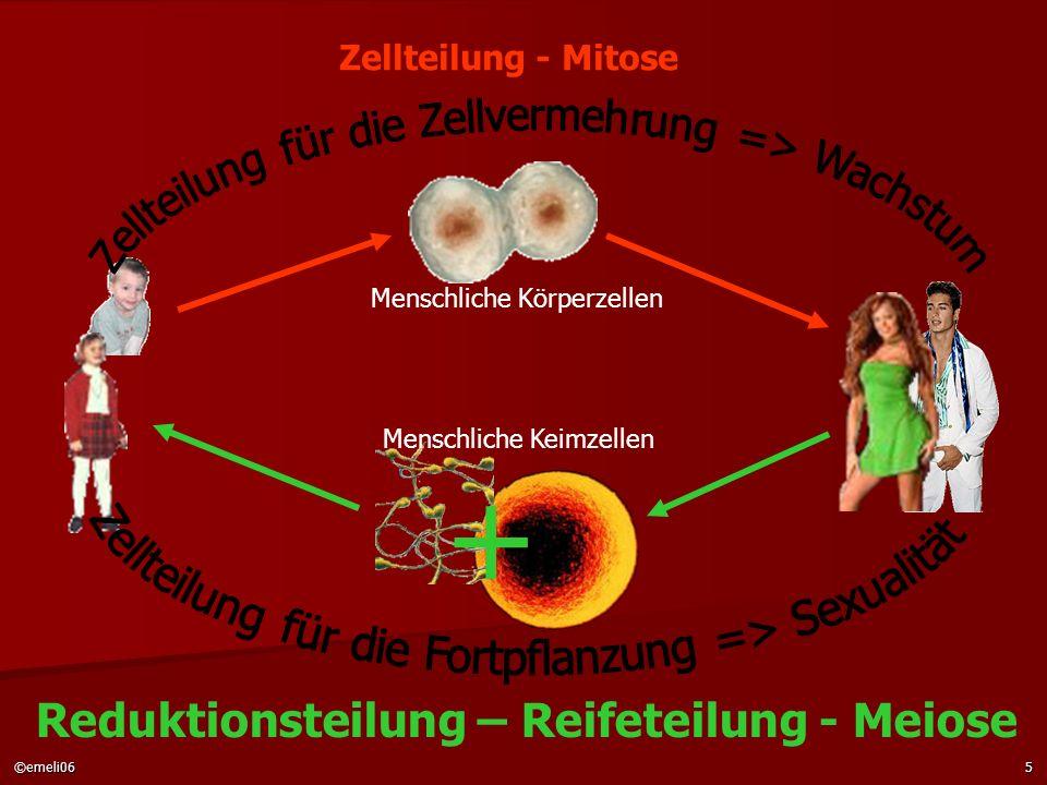 ©emeli065 Menschliche Körperzellen Menschliche Keimzellen Reduktionsteilung – Reifeteilung - Meiose Zellteilung - Mitose +