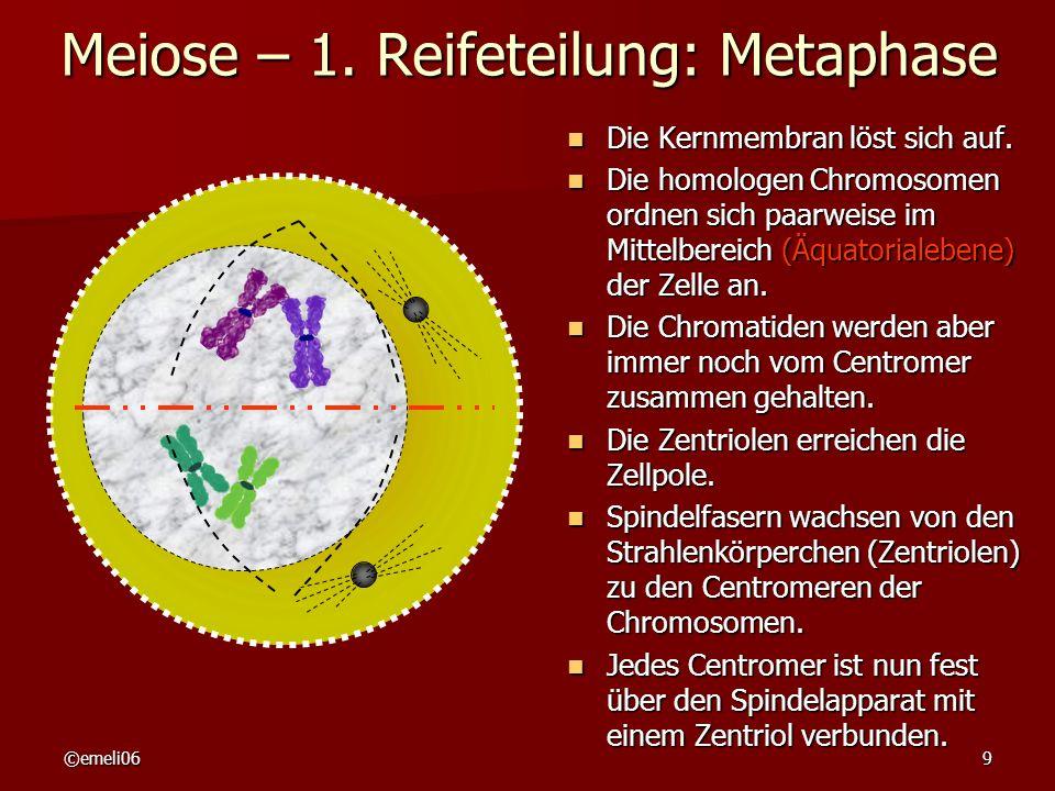 ©emeli069 Meiose – 1. Reifeteilung: Metaphase Die Kernmembran löst sich auf. Die Kernmembran löst sich auf. Die homologen Chromosomen ordnen sich paar
