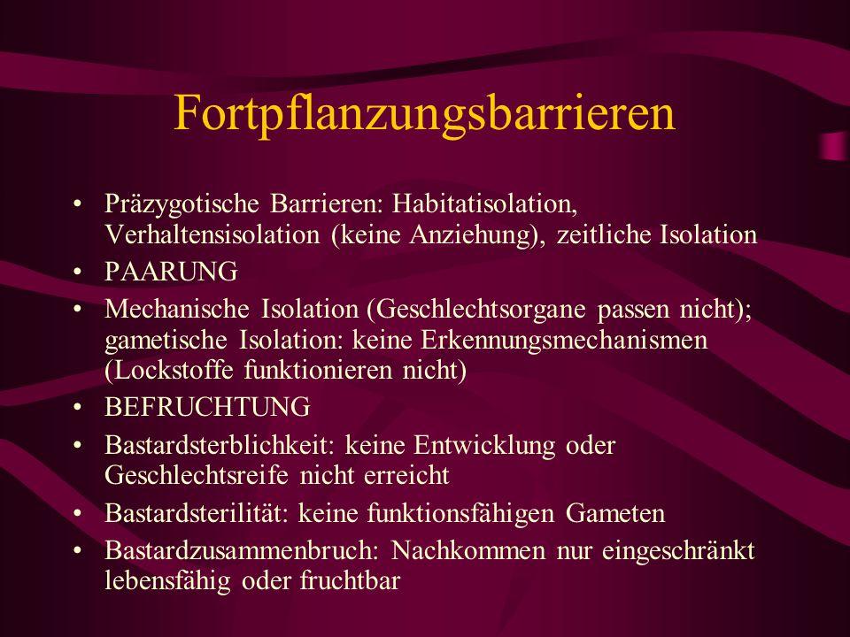Fortpflanzungsbarrieren Präzygotische Barrieren: Habitatisolation, Verhaltensisolation (keine Anziehung), zeitliche Isolation PAARUNG Mechanische Isol
