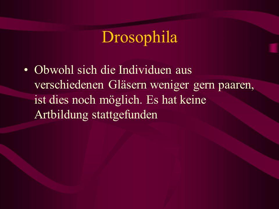 Drosophila Obwohl sich die Individuen aus verschiedenen Gläsern weniger gern paaren, ist dies noch möglich. Es hat keine Artbildung stattgefunden