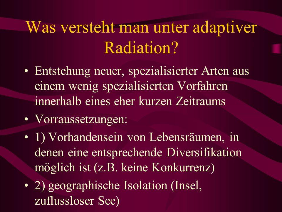 Was versteht man unter adaptiver Radiation? Entstehung neuer, spezialisierter Arten aus einem wenig spezialisierten Vorfahren innerhalb eines eher kur