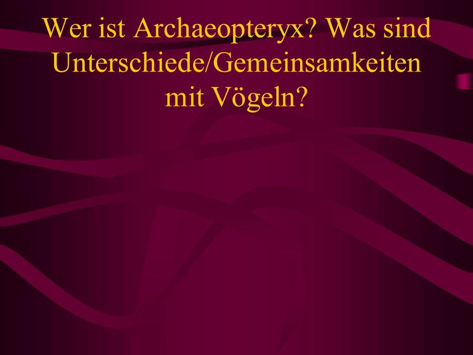Wer ist Archaeopteryx? Was sind Unterschiede/Gemeinsamkeiten mit Vögeln?