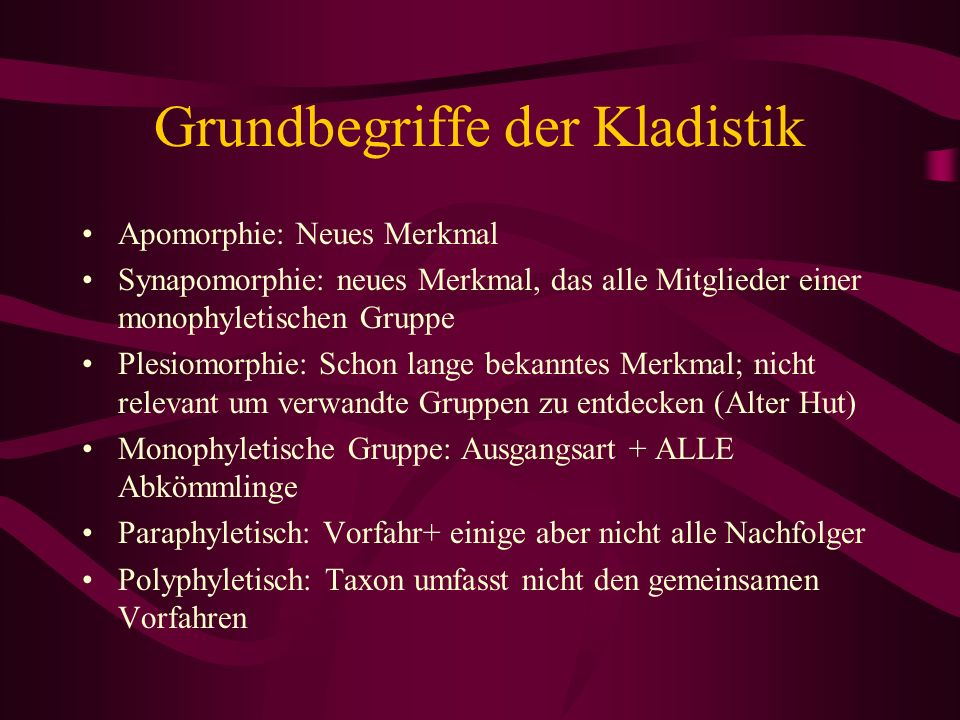 Grundbegriffe der Kladistik Apomorphie: Neues Merkmal Synapomorphie: neues Merkmal, das alle Mitglieder einer monophyletischen Gruppe Plesiomorphie: S