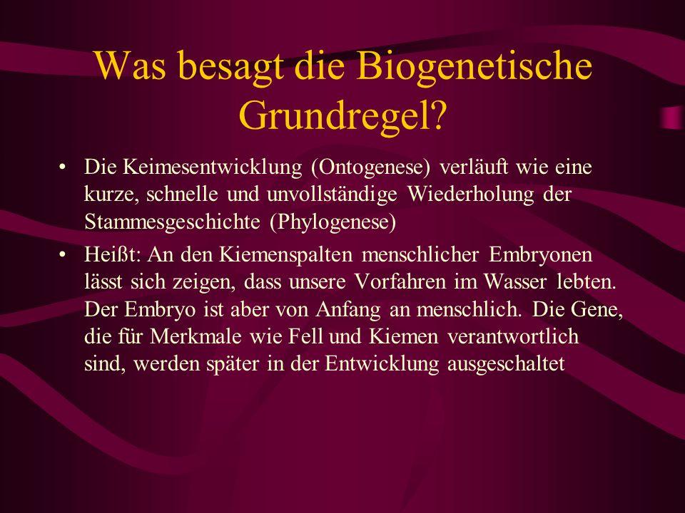 Was besagt die Biogenetische Grundregel? Die Keimesentwicklung (Ontogenese) verläuft wie eine kurze, schnelle und unvollständige Wiederholung der Stam