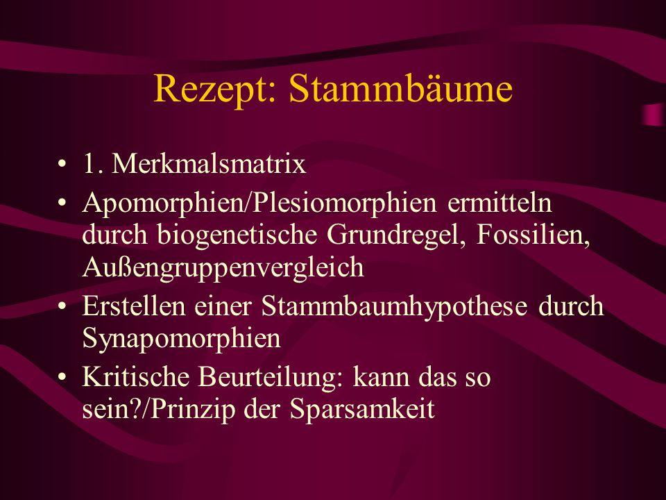Rezept: Stammbäume 1. Merkmalsmatrix Apomorphien/Plesiomorphien ermitteln durch biogenetische Grundregel, Fossilien, Außengruppenvergleich Erstellen e