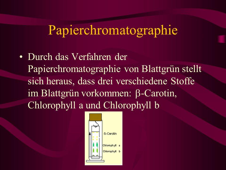 Papierchromatographie Durch das Verfahren der Papierchromatographie von Blattgrün stellt sich heraus, dass drei verschiedene Stoffe im Blattgrün vorko
