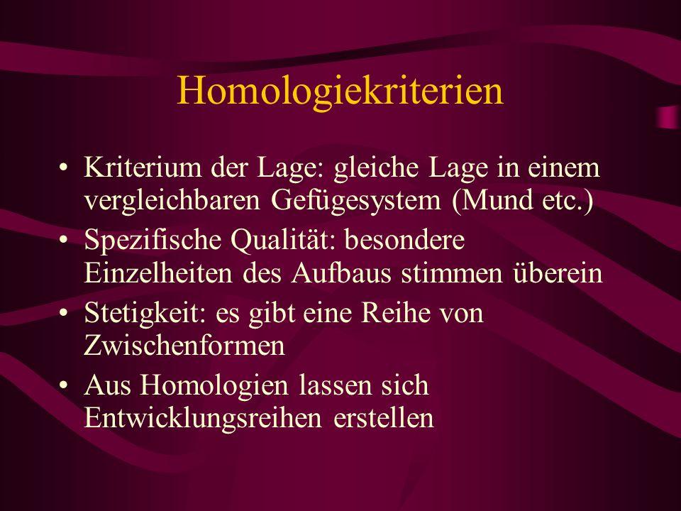Homologiekriterien Kriterium der Lage: gleiche Lage in einem vergleichbaren Gefügesystem (Mund etc.) Spezifische Qualität: besondere Einzelheiten des