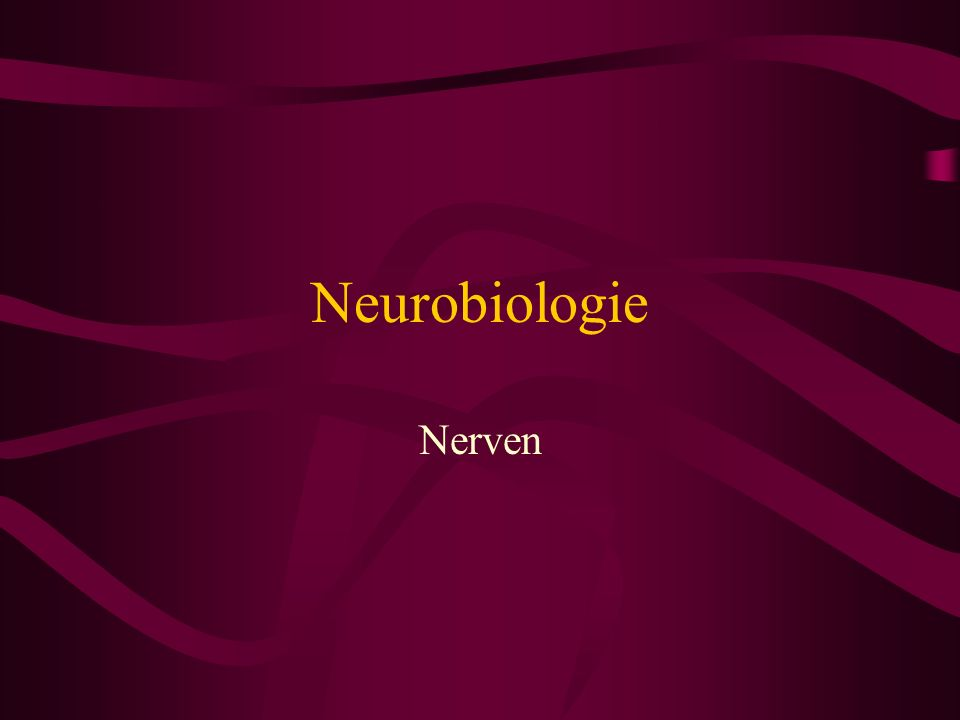 Neurobiologie Nerven