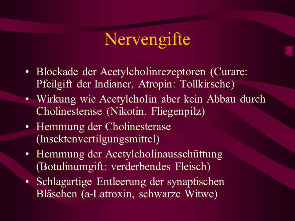 Nervengifte Blockade der Acetylcholinrezeptoren (Curare: Pfeilgift der Indianer, Atropin: Tollkirsche) Wirkung wie Acetylcholin aber kein Abbau durch