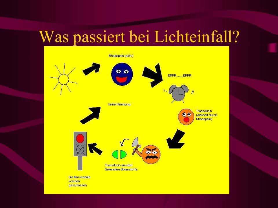 Was passiert bei Lichteinfall?