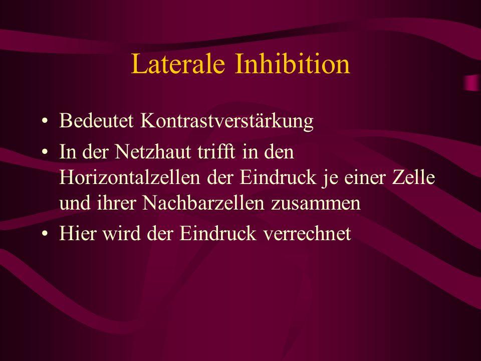 Laterale Inhibition Bedeutet Kontrastverstärkung In der Netzhaut trifft in den Horizontalzellen der Eindruck je einer Zelle und ihrer Nachbarzellen zu