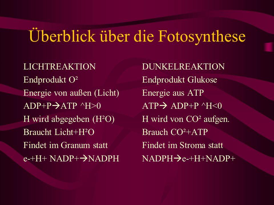 Überblick über die Fotosynthese LICHTREAKTION Endprodukt O² Energie von außen (Licht) ADP+P ATP ^H>0 H wird abgegeben (H²O) Braucht Licht+H²O Findet i