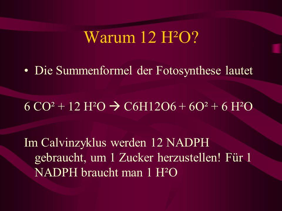 Warum 12 H²O? Die Summenformel der Fotosynthese lautet 6 CO² + 12 H²O C6H12O6 + 6O² + 6 H²O Im Calvinzyklus werden 12 NADPH gebraucht, um 1 Zucker her