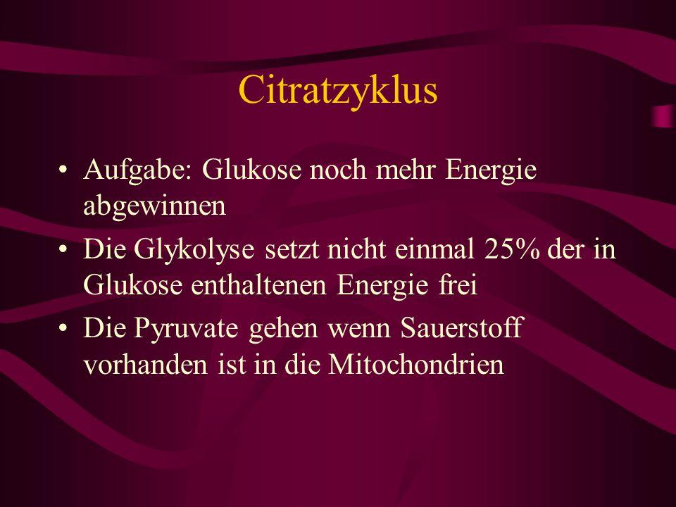 Citratzyklus Aufgabe: Glukose noch mehr Energie abgewinnen Die Glykolyse setzt nicht einmal 25% der in Glukose enthaltenen Energie frei Die Pyruvate g