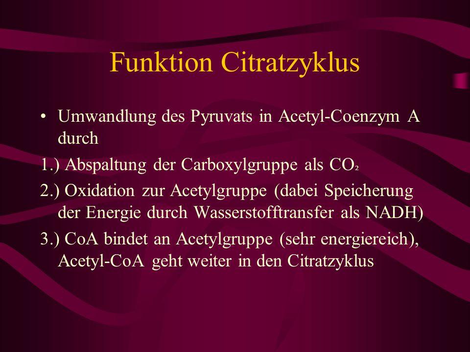 Funktion Citratzyklus Umwandlung des Pyruvats in Acetyl-Coenzym A durch 1.) Abspaltung der Carboxylgruppe als CO ² 2.) Oxidation zur Acetylgruppe (dab
